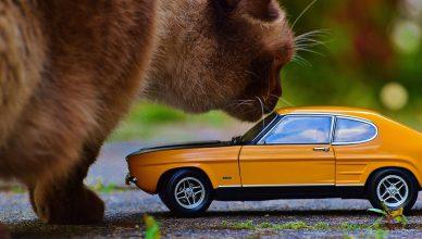 kot samochód